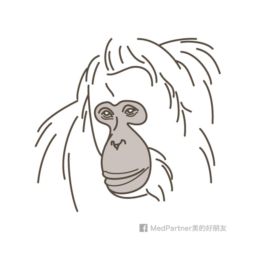 猩猩沒有法令紋