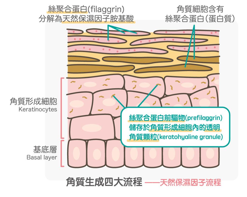 天然保濕因子流程