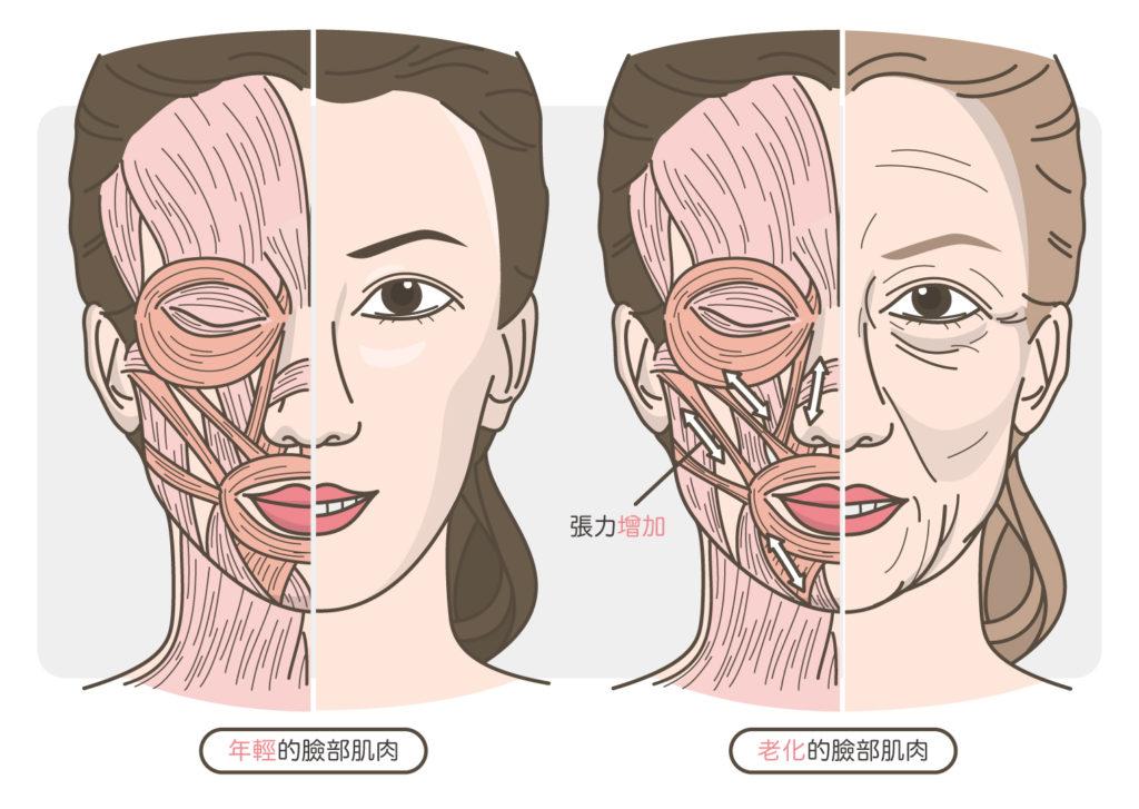 臉部肌肉的老化
