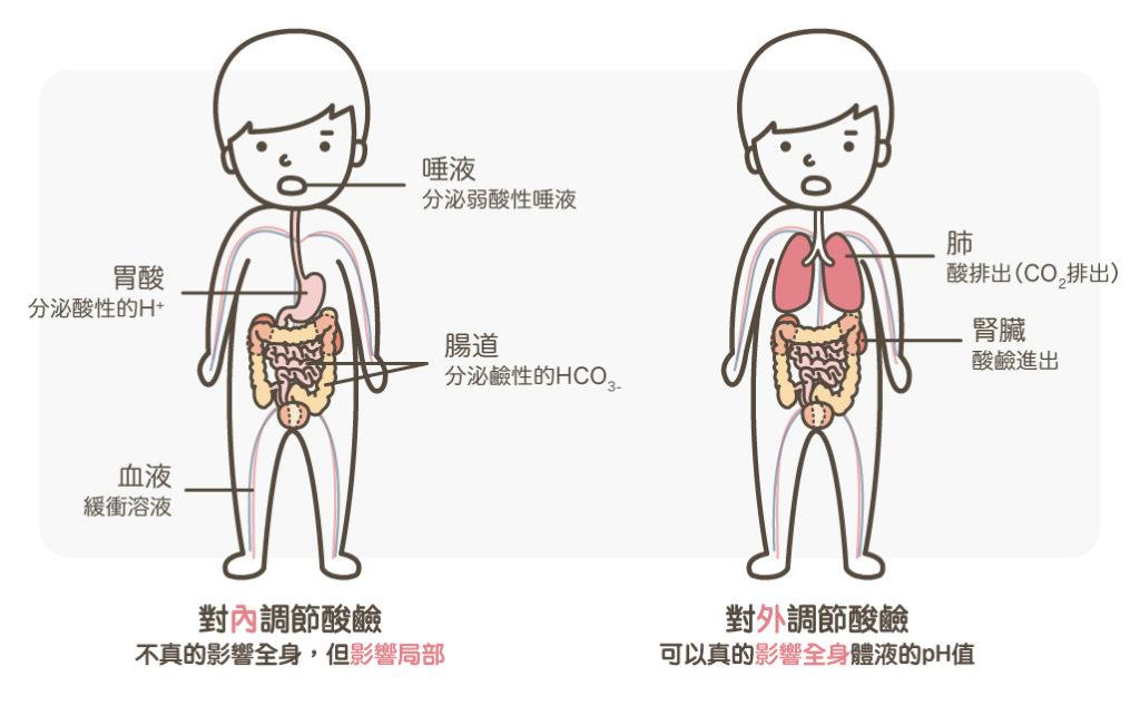 身體酸鹼調節