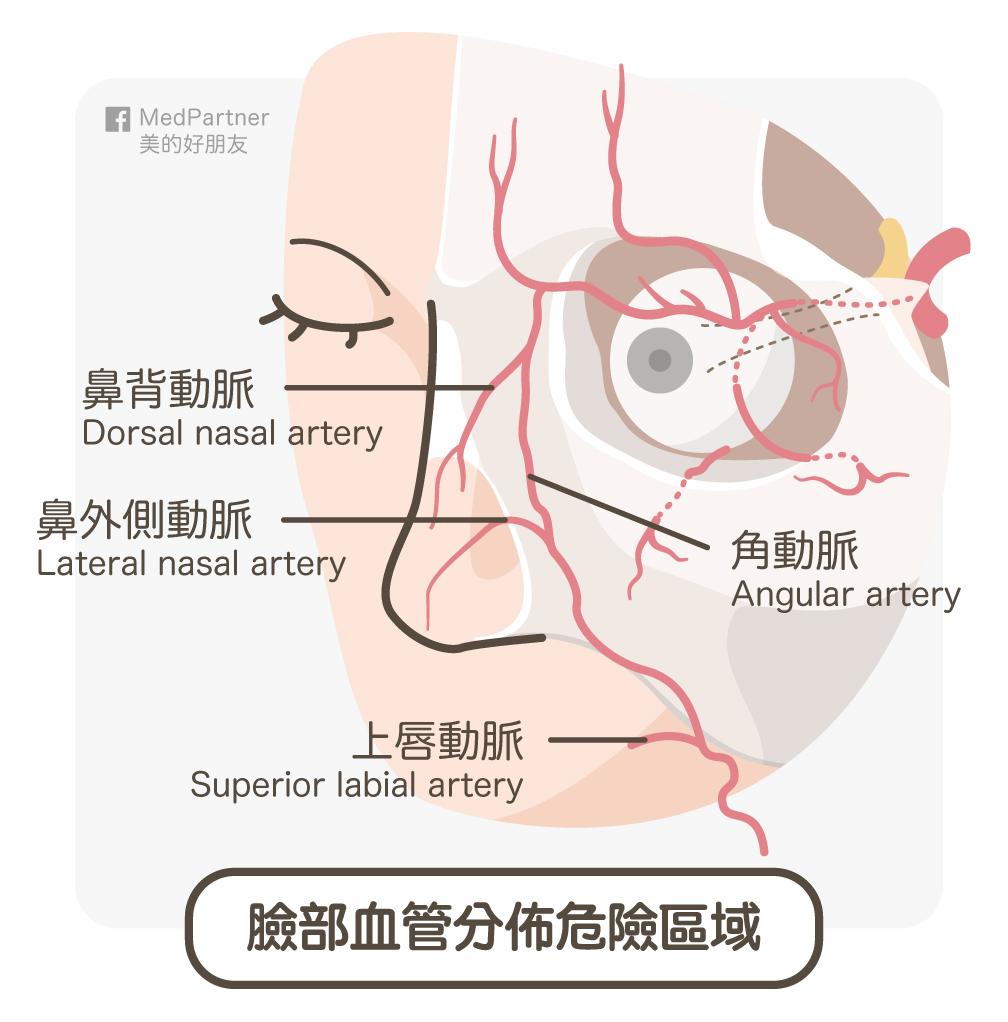 臉部危險血管
