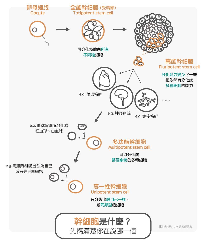 幹細胞的種類