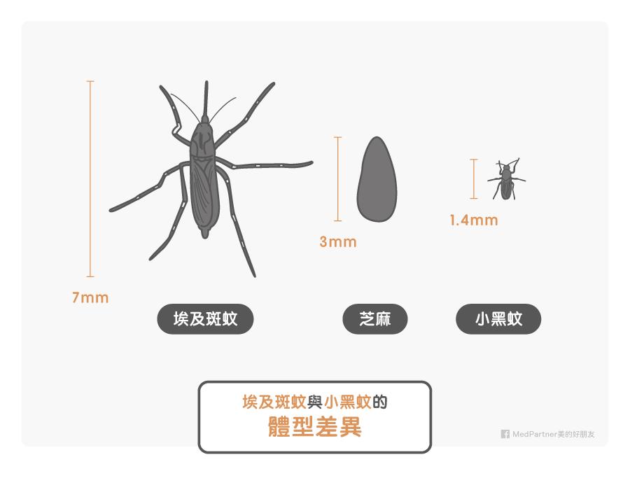 埃及斑蚊與小黑蚊的體型差異