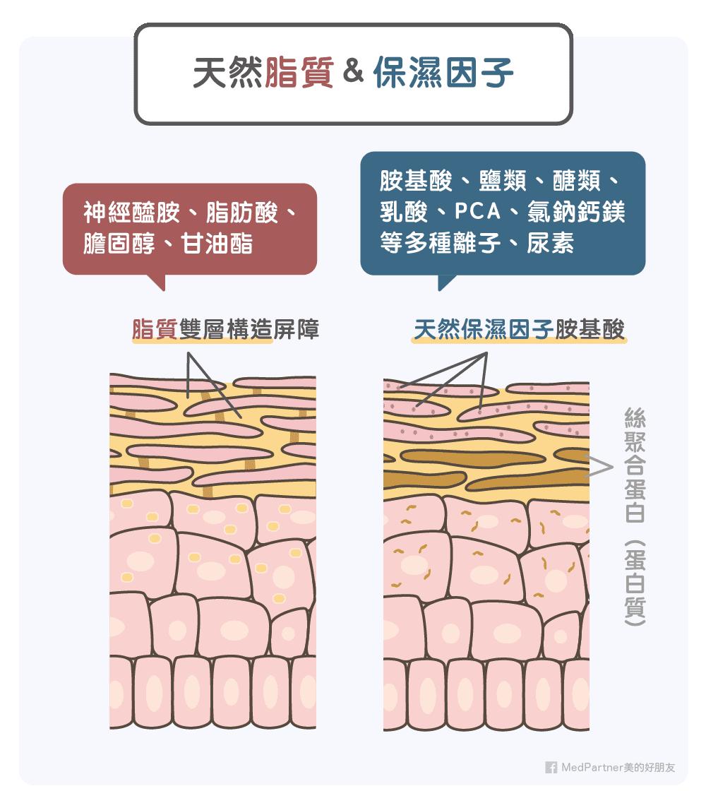 天然脂質與保濕因子