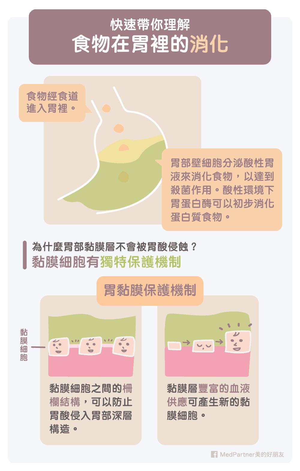 食物在胃的消化以及黏膜的作用