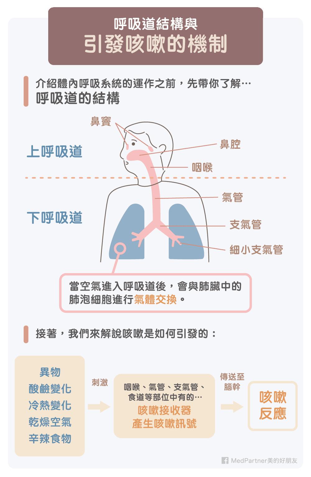 呼吸道與引發咳嗽的機制