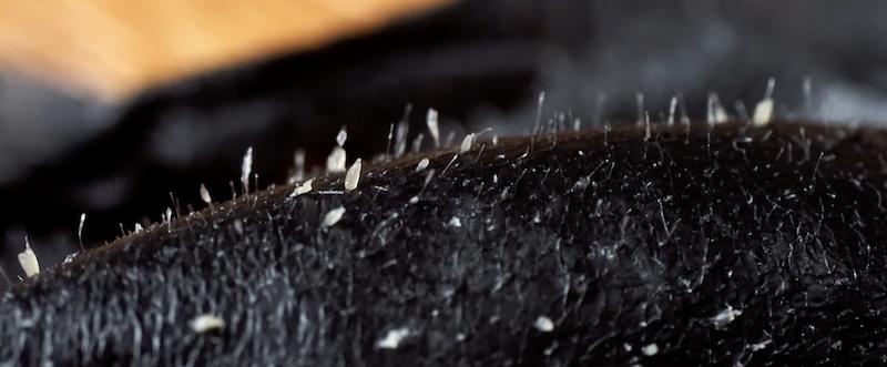 粉刺面膜拔下來的是什麼?