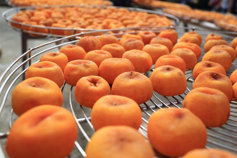 曬柿餅,陽光的紫外線能分解柿子的單寧
