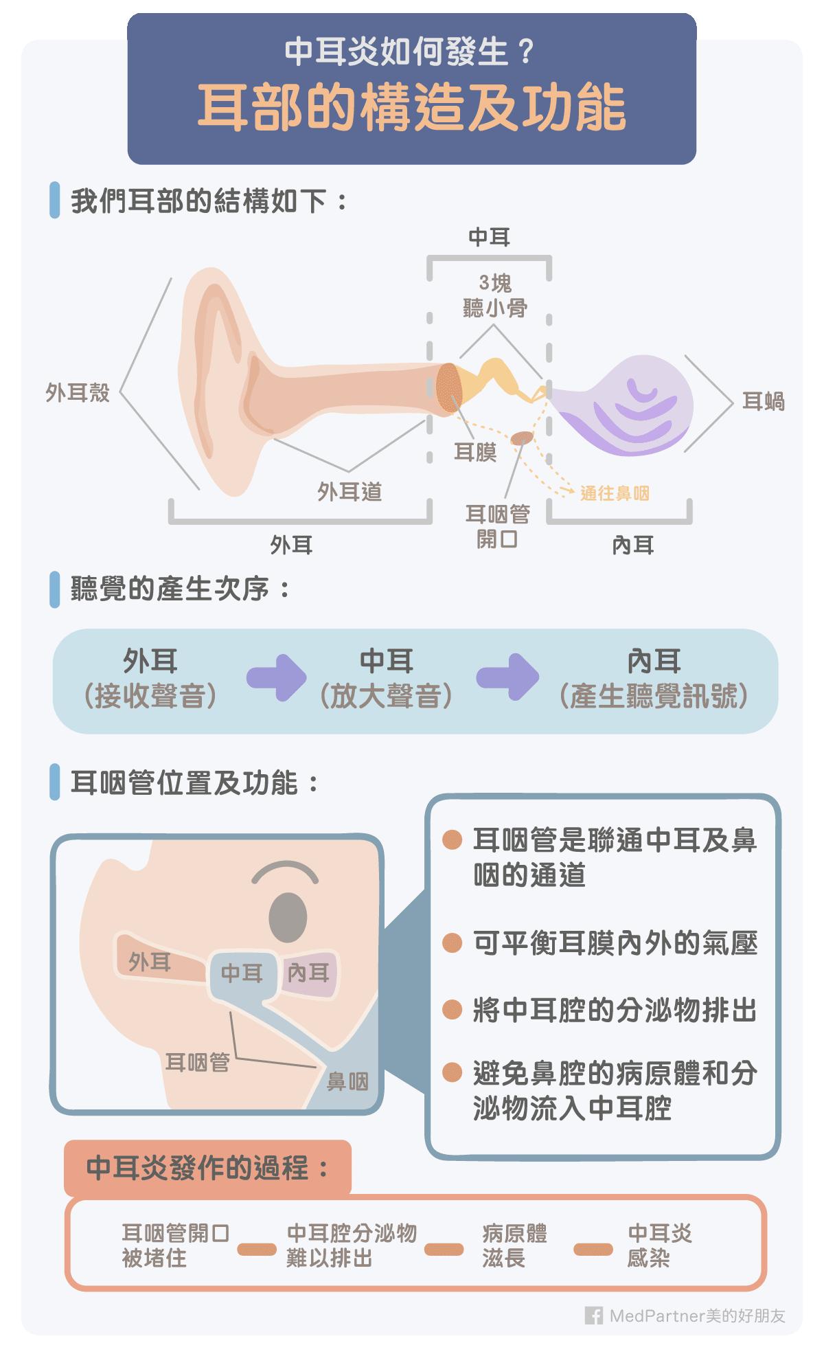 耳部的構造及功能