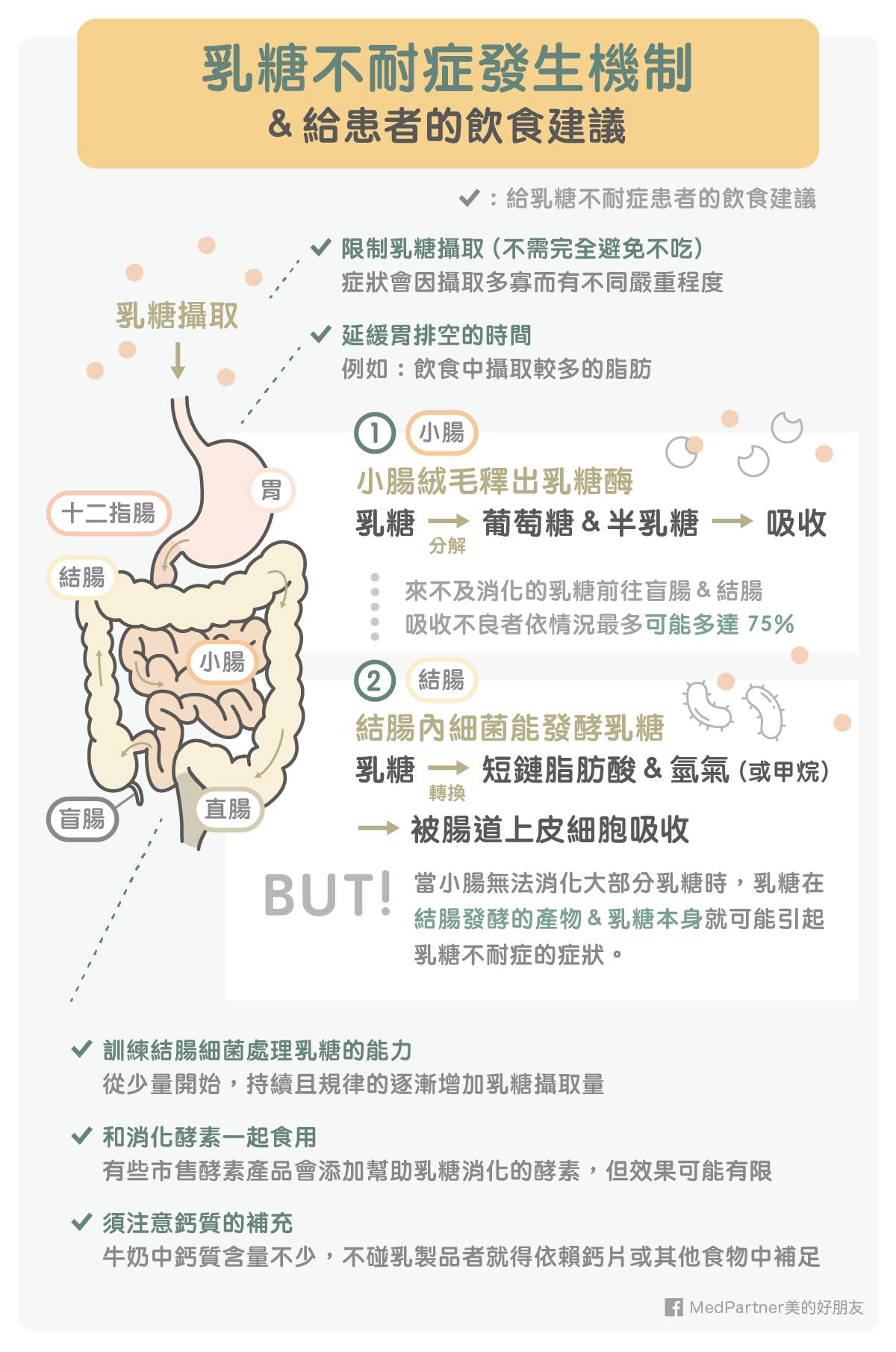 乳糖不耐症發生機制以及飲食建議
