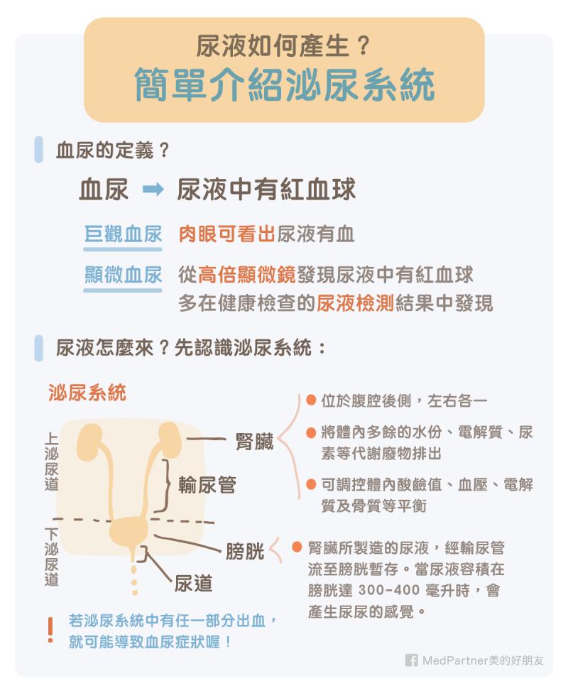 泌尿道系統簡介