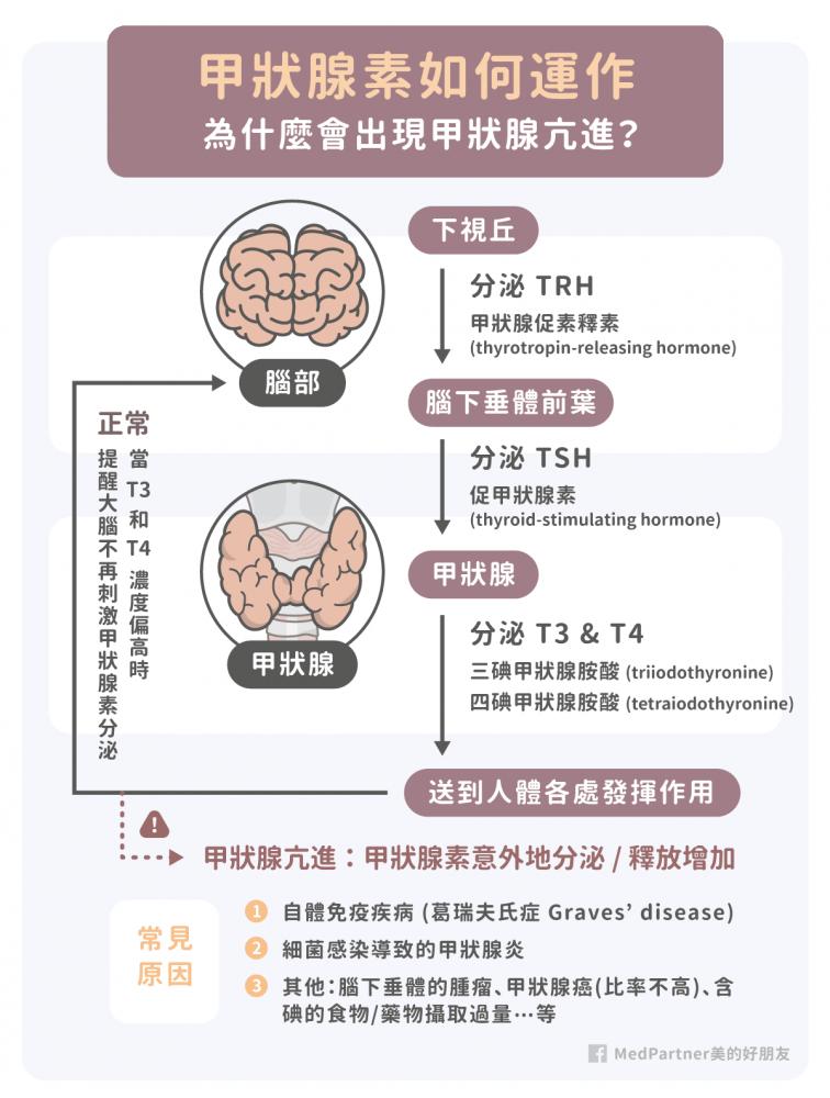 甲狀腺素的運作機制