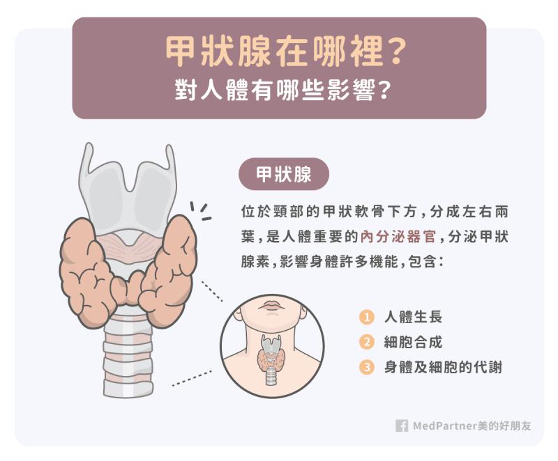 甲狀腺的位置與功能
