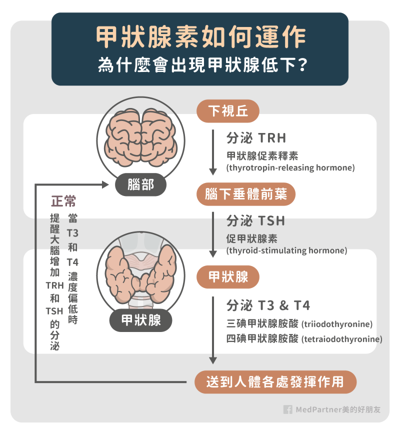 甲狀腺低下的生理機制